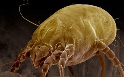 10 Techniques to Reduce Dust Mite Populations in your Home