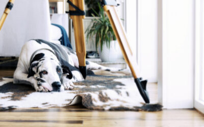 Five Reasons to Professionally Clean Your Area Rugs